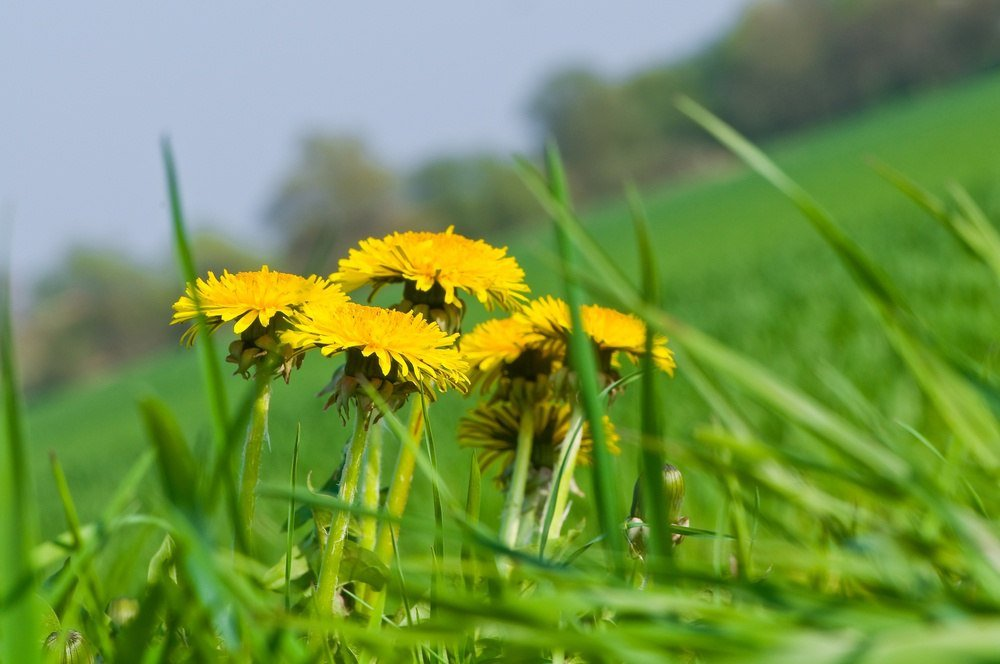 how-to-keep-your-gsa-contract-free-of-weeds