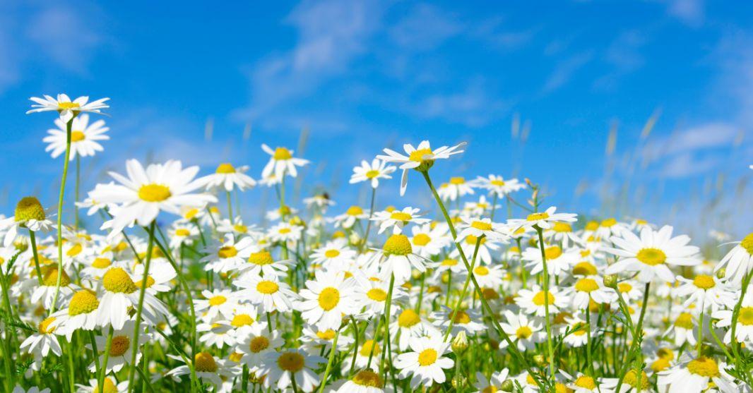 Spring Clean Your GSA Schedule